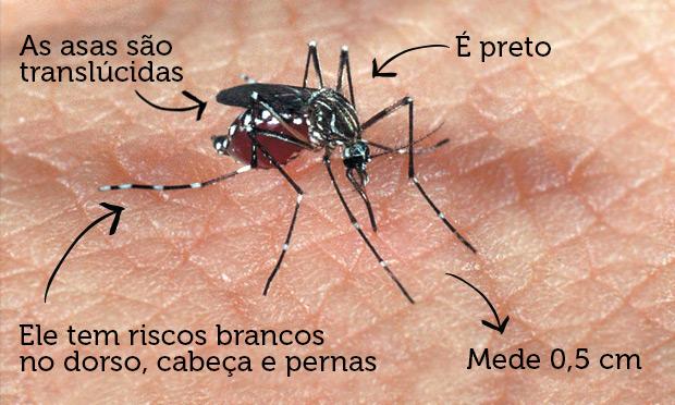 Mosquito da Dengue: O que você sabe sobre o Aedes aegypti?
